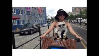 Summer Bike Ride On The West Side Nyc. Pomeranian
