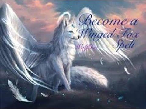 Fox Mystical Galaxy Wolf Wallpaper Novocom Top