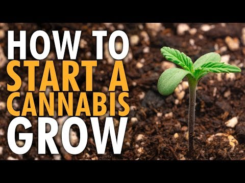 How to Start an Indoor Cannabis Grow Beginners Guide