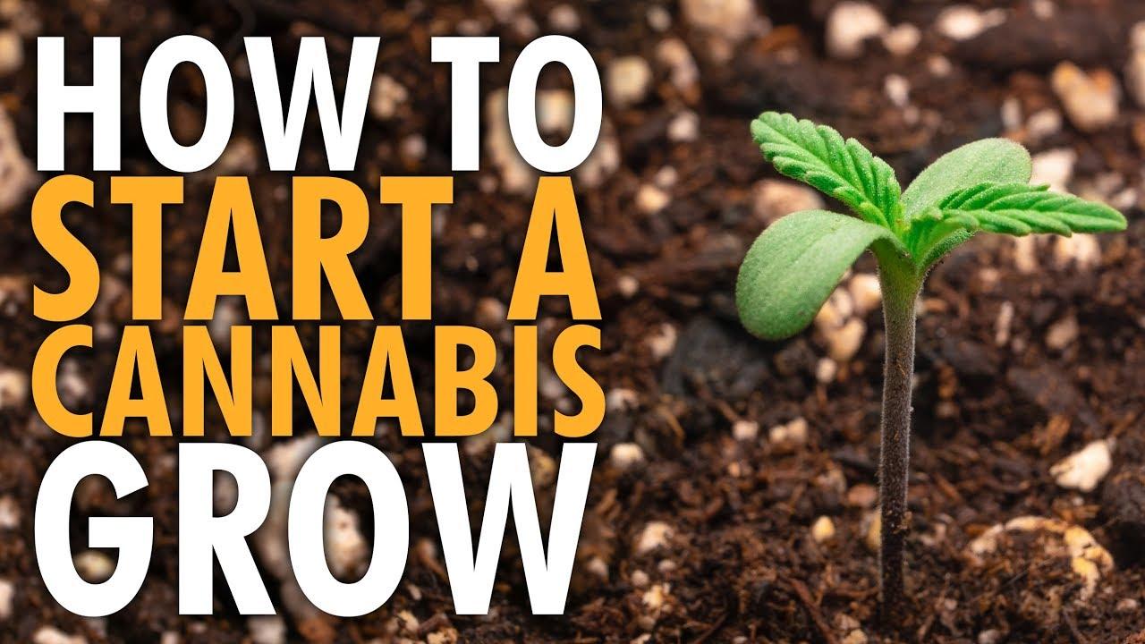 How to Start an Indoor Cannabis Grow Beginners Guide