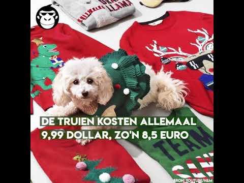 Kersttrui Hond.Dit Moet Je Hebben Een Kersttrui Voor Je Hond Youtube