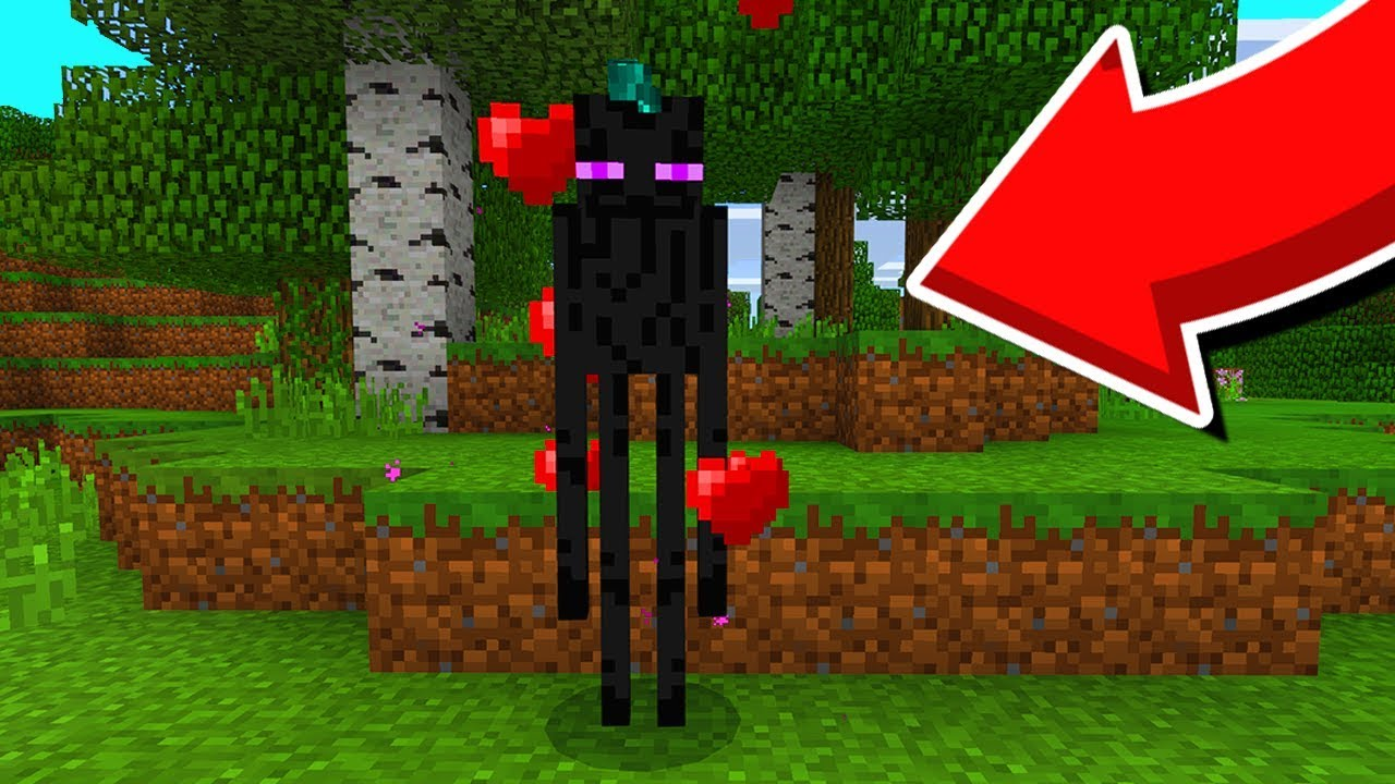 How To BREED/TAME Enderman In Minecraft Pocket Edition!