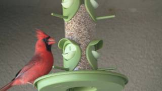 Hd Bird Feeder ( Cardinal )