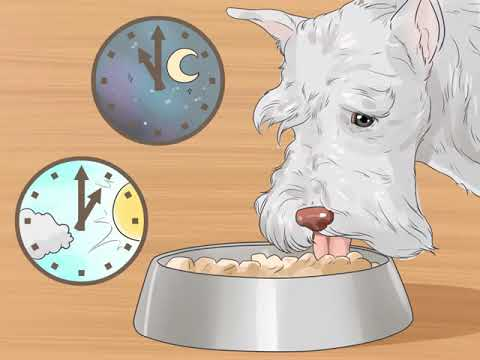 How to Care for Miniature Schnauzers