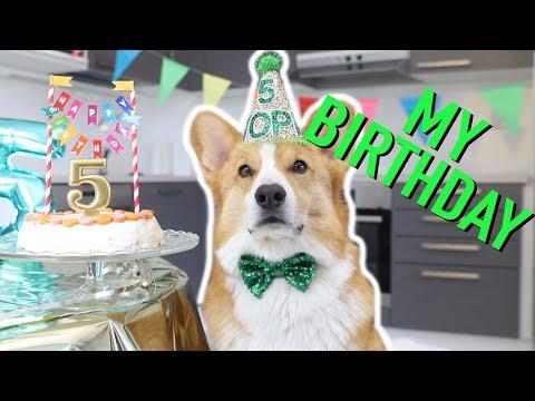 CORGI'S 5th BIRTHDAY PARTY! - Topi the Corgi