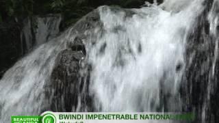 Beautiful Uganda: Bwindi Impenetrable National Park