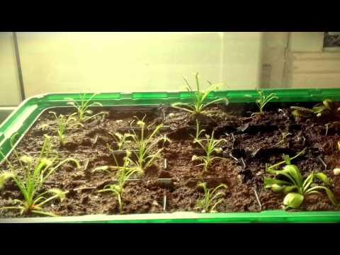 fleischfressende pflanzen schulfilm biologie doovi. Black Bedroom Furniture Sets. Home Design Ideas