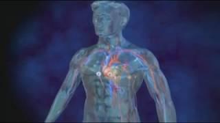 La fibrillation auriculaire expliquée en vidéo