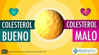 Colesterol bueno y colesterol malo