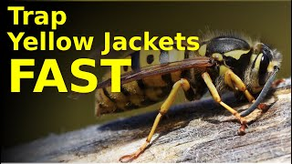 SUCKING yellow jackets right out of their nest (effective homemade trap for wasps and hornets)
