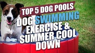 Top 5 Best Dog Pools Under $200