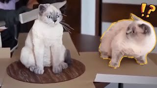 LAUGH TO TEARS Funniest Scared Cats Reaction ever. Cats Scared of Cucumbers Compilation 2021 !!