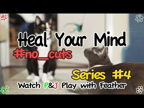 Relaxing Video HYM #4 - Cats play with Feather (힐링영상 - 깃털과 노는 고양이들)