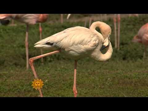 Florida's Flamingos