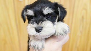 http://passerellewan.jp/puppies/?type=32.
