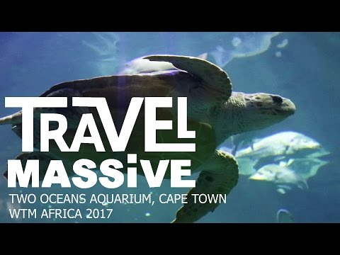 Cape Town Travel Massive WTM Africa Event 2017 | Two Oceans Aquarium