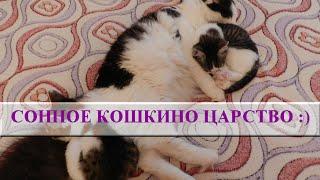 Как спят кошки? Как в русской сказке! Сначала банька, потом сон :)