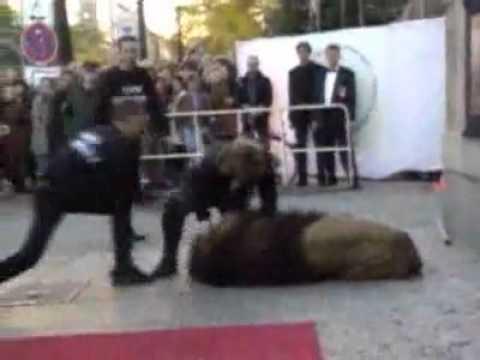 Lion Attacks Owner