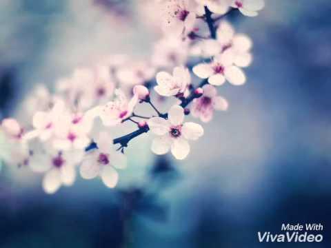 Романтичные картинки 🌹