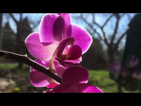 April Ottey Jewelry - Casting Orchids