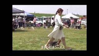 BOB ノーリッチテリア(4) レギュラー オス・CH.BRAH JP'S GRIZZLY(...