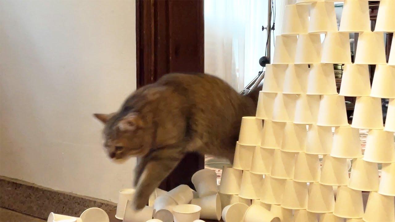 이 종이컵 너머엔 고양이 츄르가 있다