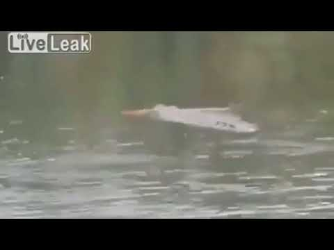 Horrifying video of shaman dragged under water by crocodile
