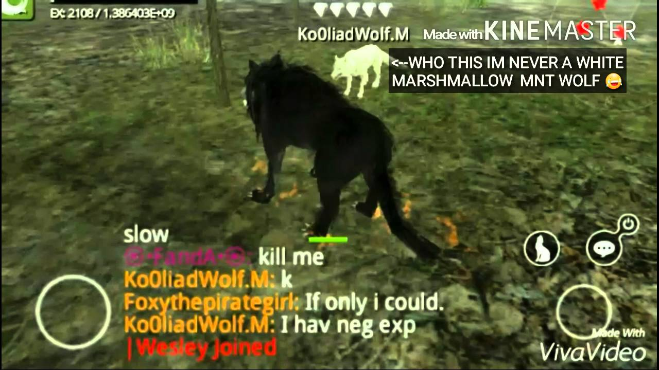 Red color code wolf online - Wolf Online Ko0liad Wolf It S My Name