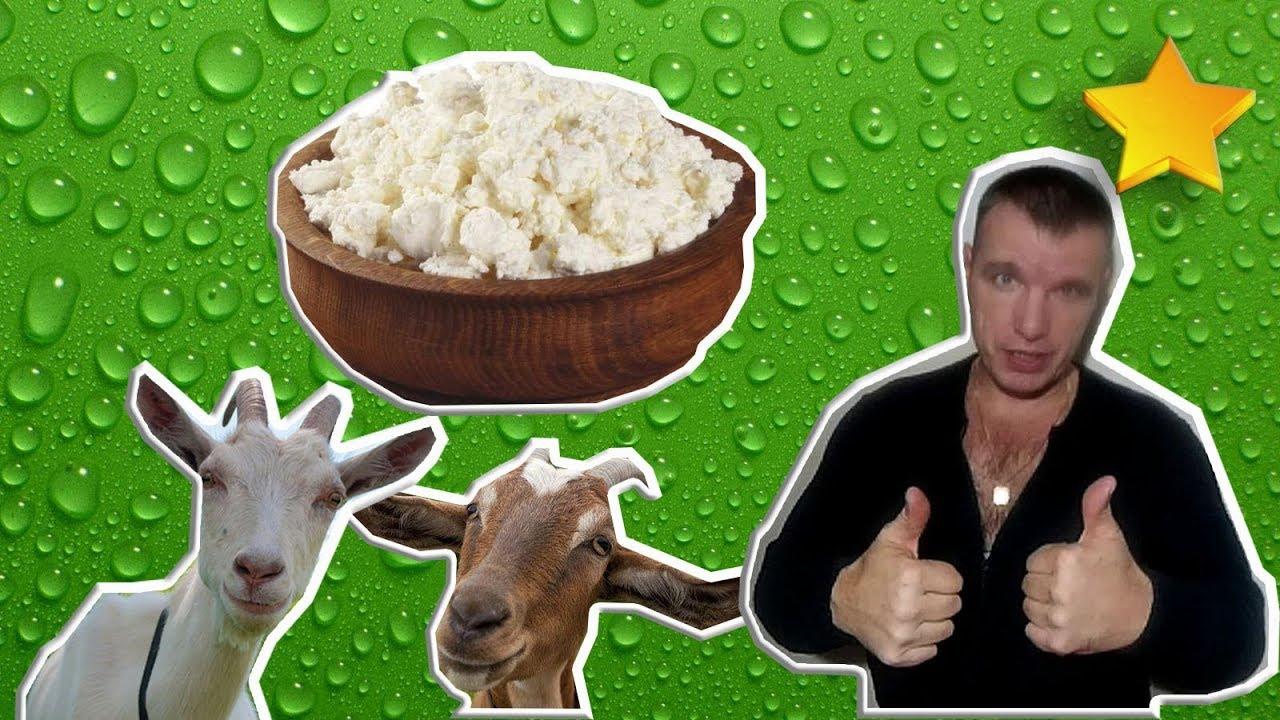 Творог козий от крыловых. Заказы на товар принимаются до среды 15:00. Творог изготавливается из молока коз зааненской породы. Цена за 1 кг: 26. 40.
