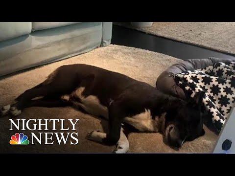 Italian Ikea Opens Up Its Doors For Stray Dogs | NBC Nightly News