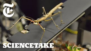 How a Stick Insect Walks | ScienceTake