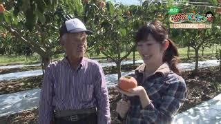 鳥取県米子市で柿や梨を栽培している前田好則さん。柿2品種、梨5品種...