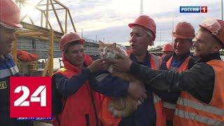 На Крымском мосту в начале декабря шум строительной техники изменится на мерный стук колес поезда …