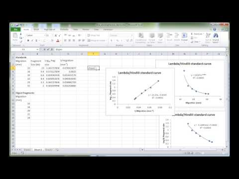 MBLG1 DNA electrophoresis analysis in Excel