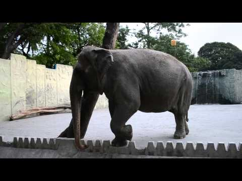 Half donkey half elephant