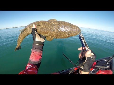 Wellington Point Fishing Big Flathead And Little Reefies On Dragon Kayak