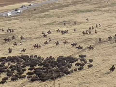 Bison Roundup: video and slides