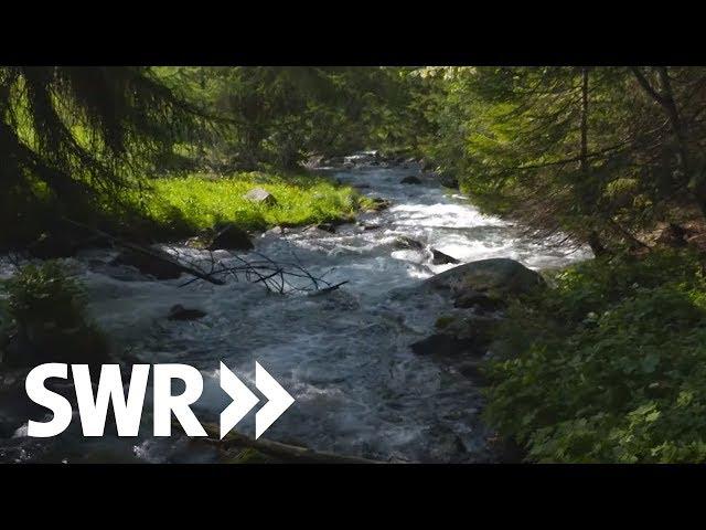 Südtirol, Gardasee, Adria - die Etsch | SWR Geschichte & Entdeckungen