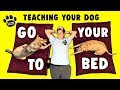 How To Teach Your Dog Go To Their Bed - Professional Dog Training