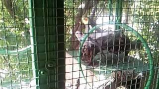 Amateur parrot porn