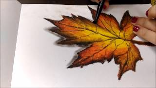 Realistic leaf drawing using oil pastel(time-lapse)