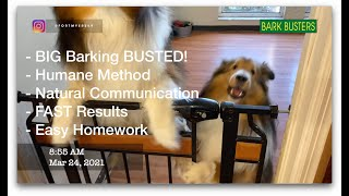 #sheltie #shetlandsheepdog stop their barking!  Dog Training of @FortMyersK9  Best Dog Trainer