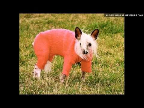 dutch barge dog