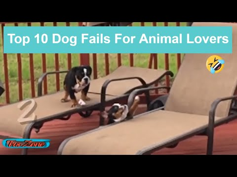 Top 10 Dog Fails For Animal Lovers