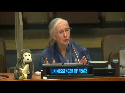 Jane Goodall, UN Messenger of Peace on International Day of Peace