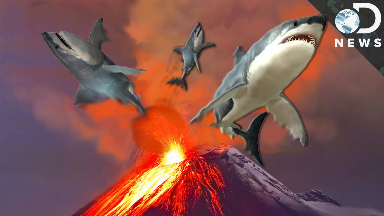 6 insane animals that live in volcanos youtube