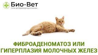 Фиброаденоматоз или гиперплазия молочных желез. Ветеринарная клиника Био-Вет.