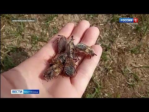 Вопрос: Куда летят майские жуки в мае и возвращаются ли назад?