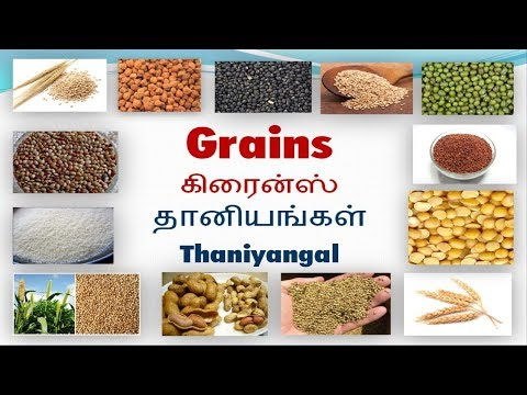 Vocabulary about Grains with pictures including Tamil meaning thumbnail