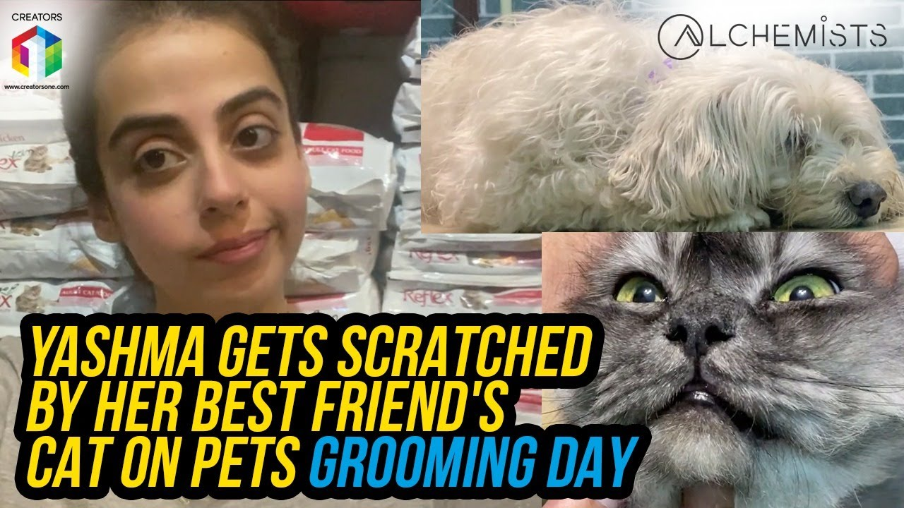 Yashma GETS Scratched By Her Best Friend's Cat On Pets Grooming Day | Vlog | Yashma Gill